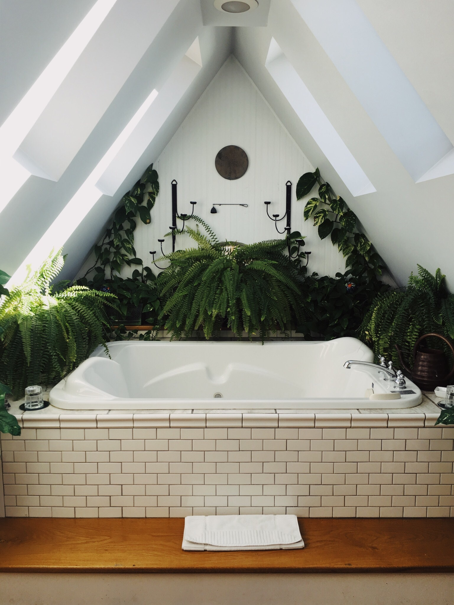 What Plants Can Survive in a Bathroom Doors & More